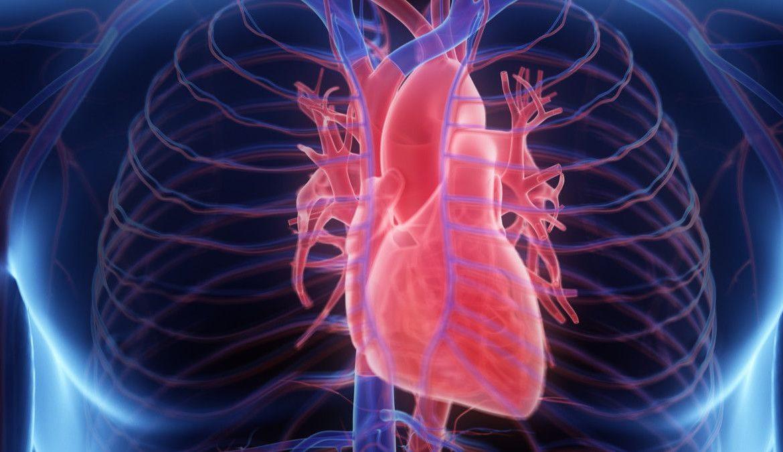 Menurunkan Kolesterol dan Menyehatkan Jantung