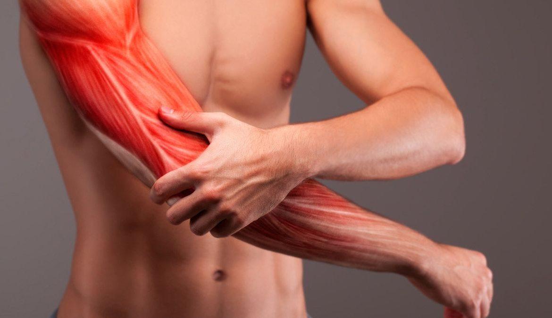 Membentuk Otot