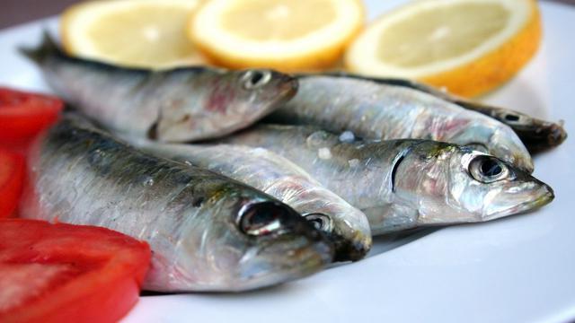 Kandungan Nutrisi dalam Ikan Sarden
