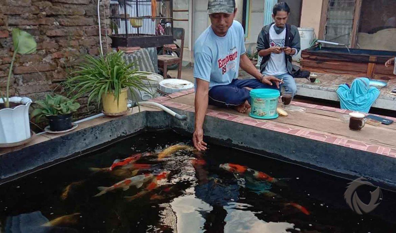 16.   Memelihara Ikan