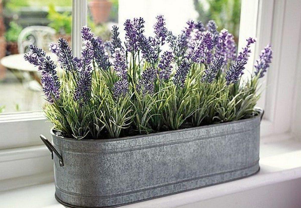 20.   Menanam Tanaman Lavender