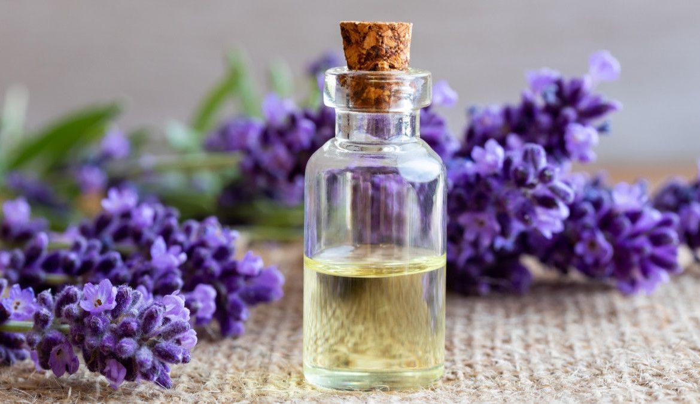 3.   Minyak Lavender