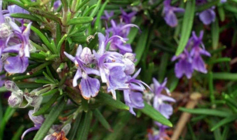 7.   Menggunakan Bunga