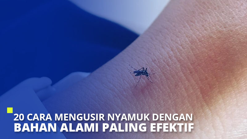 20 Cara Mengusir Nyamuk dengan Bahan Alami Paling Efektif