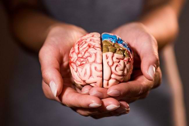 3. Memperkuat Fungsi Otak
