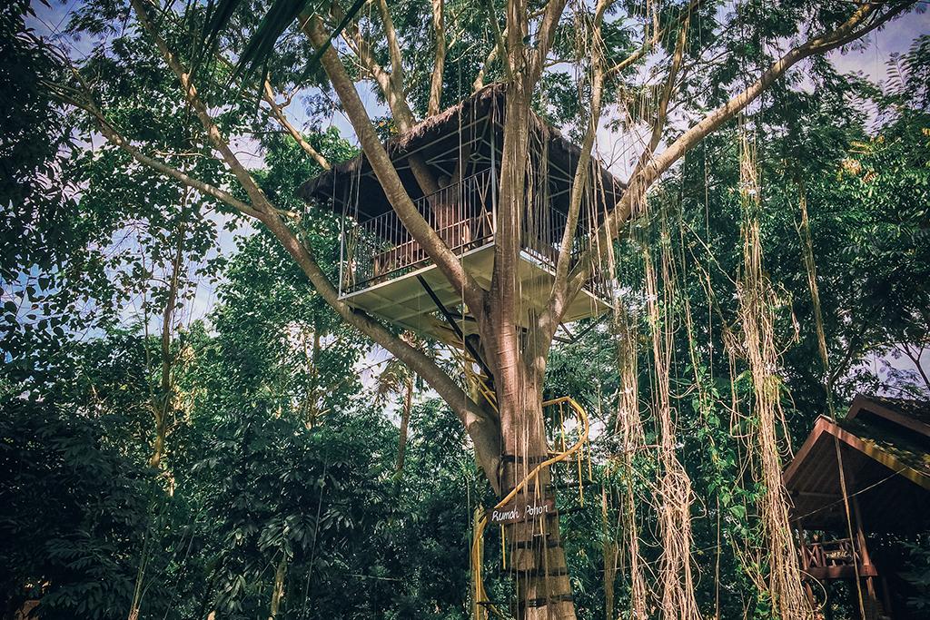 7.   Bersantai Ria di Rumah Pohon