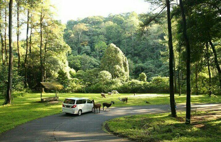 1. Alamat Taman Safari Jawa Timur