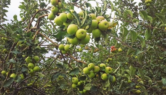 16.   Agrowisata Bumiaji