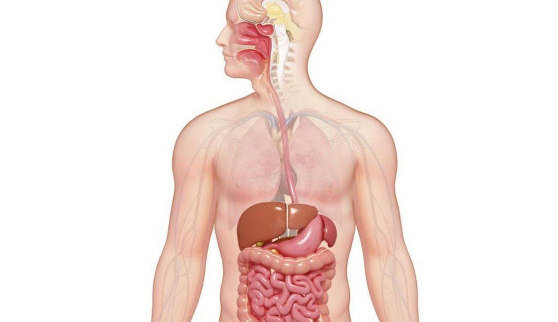17.   Melancarkan Sistem Pencernaan