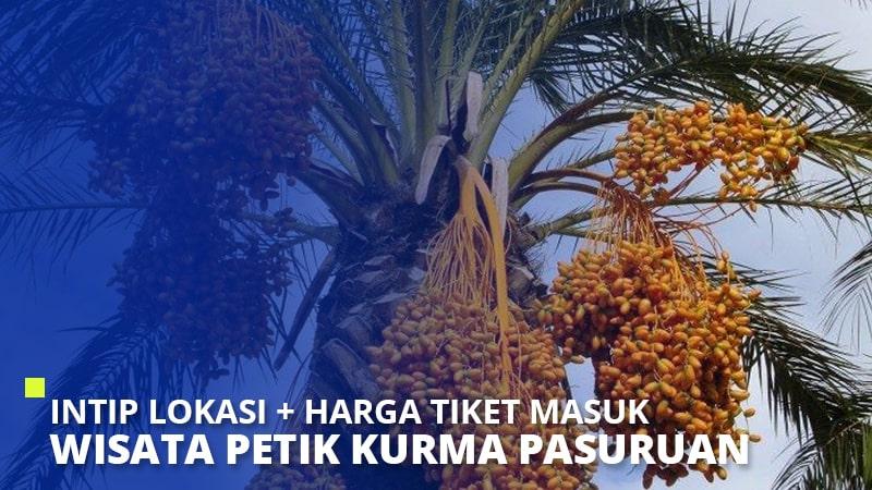 Wisata Petik Kurma Pasuruan, Lokasi + Harga Tiket Masuk 2020