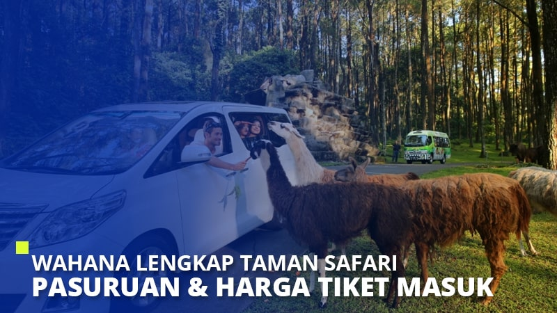 Wahana Lengkap Taman Safari Pasuruan & Harga Tiket Masuk