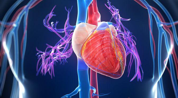 3.   Menghindari Penyakit Jantung
