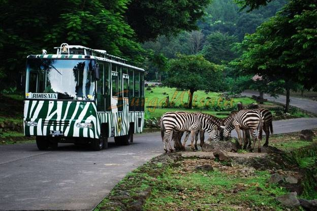 4. Jam Buka Taman Safari Pasuruan