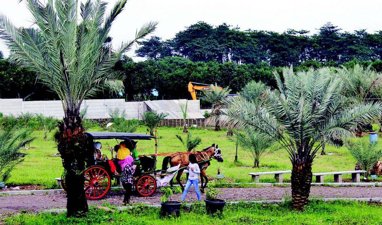 6. Tempat Wisata Petik Kurma Pertama di Indonesia