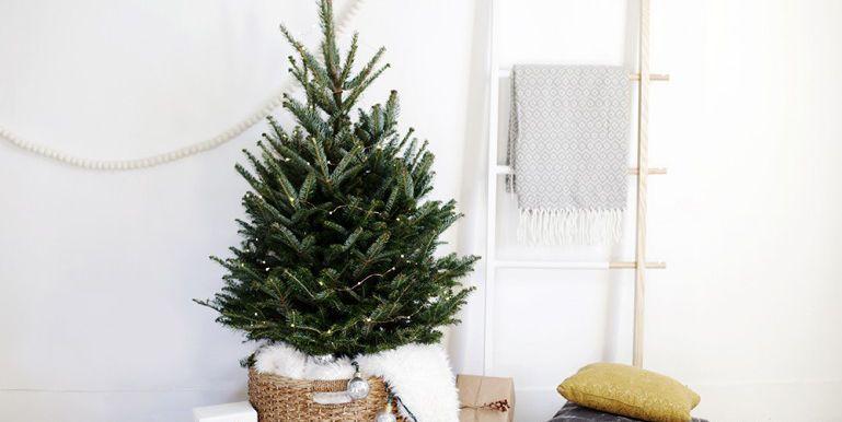 8.   Pohon Natal Mini