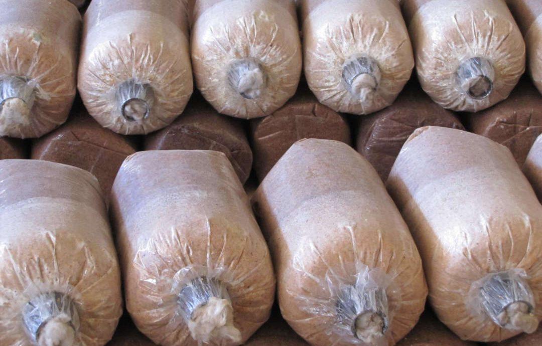 3. Ketahui Masa Fermentasi Baglog Jamur Tiram