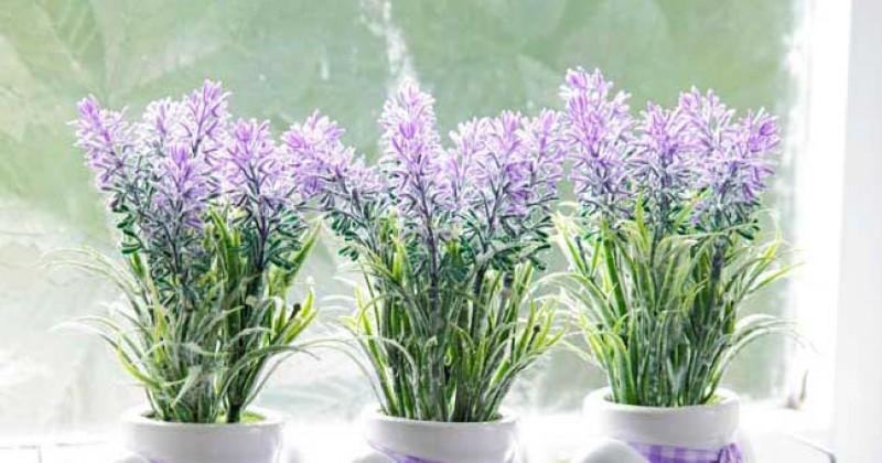 13. Lavender