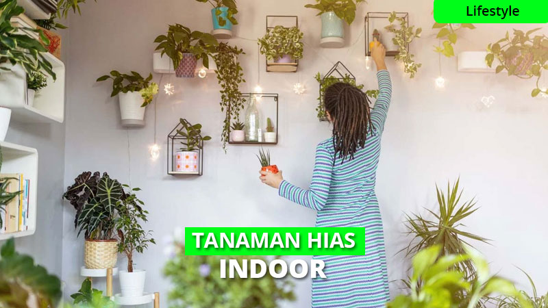16 Macam Tanaman Indoor, Bikin Rumahmu Semakin Nyaman!