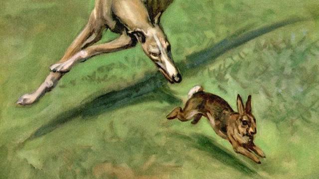 8. Anjing Pemburu dan Kelinci