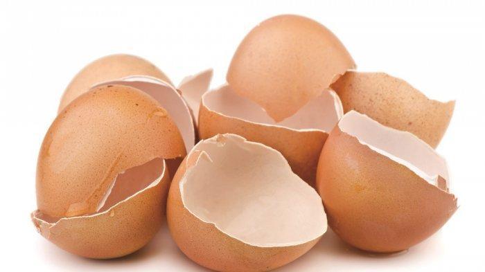 13. Kulit Telur
