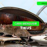 16 Cara Ampuh Mengusir Tikus di Rumah Pakai Bahan Alami